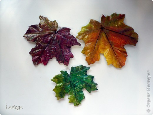 позировали: лопух, бадан и капустный лист фото 3
