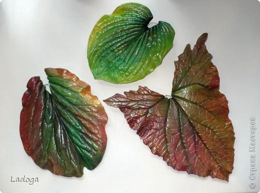 позировали: лопух, бадан и капустный лист фото 4