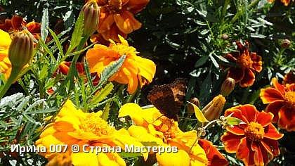 Крапивница. фото 26