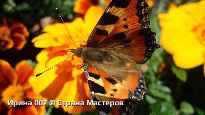 Крапивница. фото 21