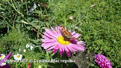 Крапивница. фото 19