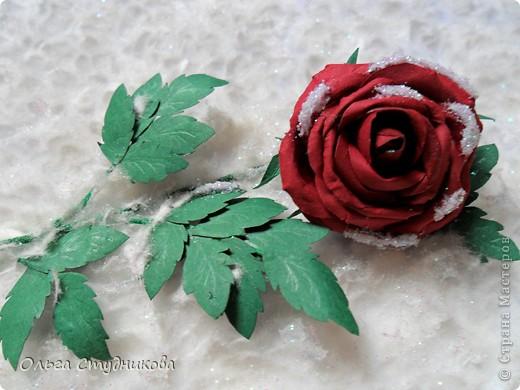 Лежала роза на снегу... фото 1