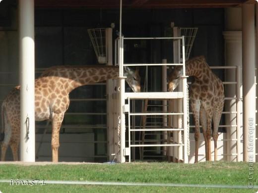 Выходные провели в зоопарке. Все снимки сделала моя 12летняя дочка. Вот какие моменты были запечатлены....Приятного просмотра! фото 14