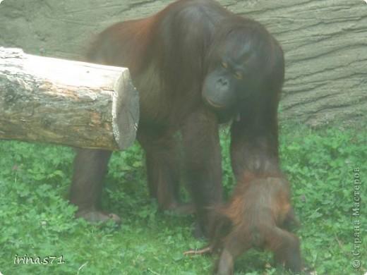 Выходные провели в зоопарке. Все снимки сделала моя 12летняя дочка. Вот какие моменты были запечатлены....Приятного просмотра! фото 2