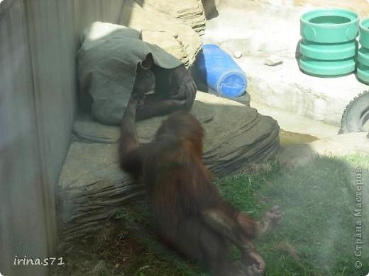 Выходные провели в зоопарке. Все снимки сделала моя 12летняя дочка. Вот какие моменты были запечатлены....Приятного просмотра! фото 4