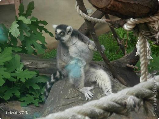 Выходные провели в зоопарке. Все снимки сделала моя 12летняя дочка. Вот какие моменты были запечатлены....Приятного просмотра! фото 5