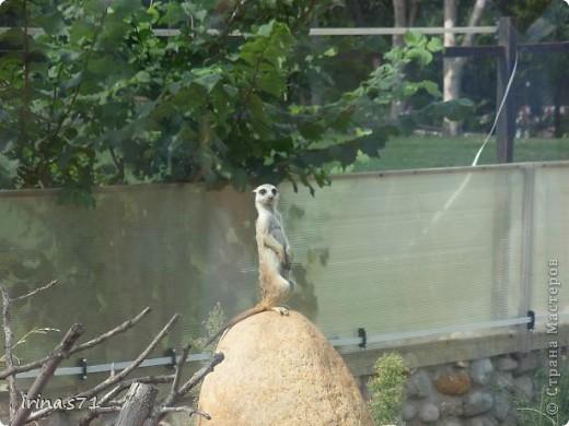 Выходные провели в зоопарке. Все снимки сделала моя 12летняя дочка. Вот какие моменты были запечатлены....Приятного просмотра! фото 7