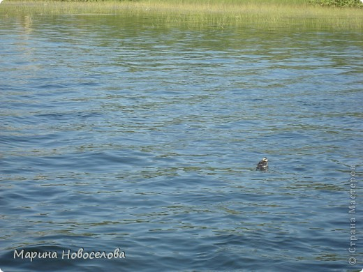 Представляю вашему вниманию большой, увлекательный и веселый фоторепортаж о путешествии по реке Чусовой - жемчужине Урала. Фото сделаны в августе прошлого года и в нынешнем году фото 16