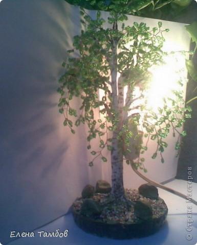 Наш дом со всех сторон окружают взрослые, высокие, раскидистые берёзы. Я очень люблю эти деревья, поэтому сотворила прошлой осенью зелёную красавицу. Очень хотелось продлить лето. Мне показалось скучно сделать просто дерево - поделку, поэтому я добавила  второй ствол  и обычную лампочку. фото 4