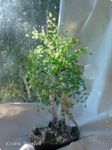 Наш дом со всех сторон окружают взрослые, высокие, раскидистые берёзы. Я очень люблю эти деревья, поэтому сотворила прошлой осенью зелёную красавицу. Очень хотелось продлить лето. Мне показалось скучно сделать просто дерево - поделку, поэтому я добавила  второй ствол  и обычную лампочку. фото 3
