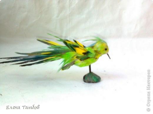 Мы когда - то держали волнистых попугаев. Кто их держал дома, тот знает сколько перьев сыплется из клетки, особенно много их во время линьки. Самые красивые Мы собирали. Сын использовал их на уроке труда в школе.  Мне как - то пришла идея сделать птичку из этих перьев. МК показать не могу, так как  этой птичке лет 8, да и идея моя скорее всего не новая.  фото 1