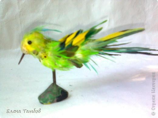 Мы когда - то держали волнистых попугаев. Кто их держал дома, тот знает сколько перьев сыплется из клетки, особенно много их во время линьки. Самые красивые Мы собирали. Сын использовал их на уроке труда в школе.  Мне как - то пришла идея сделать птичку из этих перьев. МК показать не могу, так как  этой птичке лет 8, да и идея моя скорее всего не новая.  фото 2