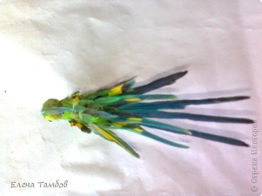 Поделка из перьев попугая 47