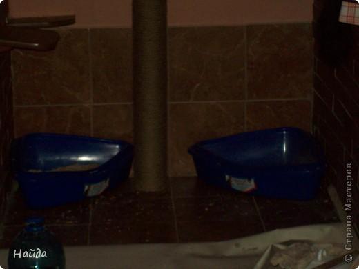 нужно сделать одновременно туалет для кошек и лазалки дано-лоджия 6м длиной и 1,2 шириной и 14 кошек убрала старую отделку со стены и потолка,отодрала старый линолеум, его все равно менять надо было. общая площадь угла 1,2х1,2 м полки повесила в шахматном порядке, как лесенку фото 9