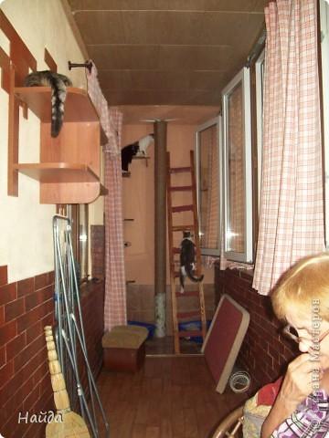 нужно сделать одновременно туалет для кошек и лазалки дано-лоджия 6м длиной и 1,2 шириной и 14 кошек убрала старую отделку со стены и потолка,отодрала старый линолеум, его все равно менять надо было. общая площадь угла 1,2х1,2 м полки повесила в шахматном порядке, как лесенку фото 8