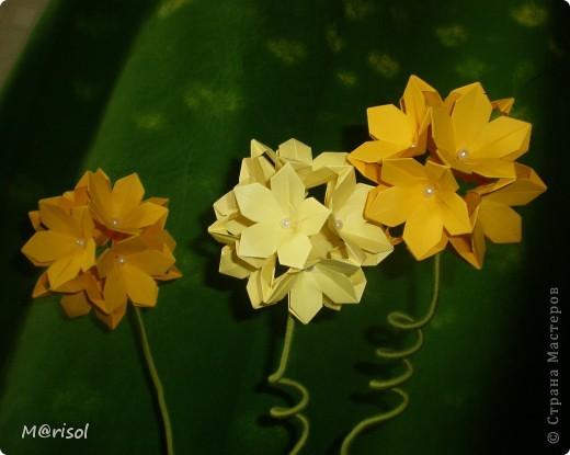 Кусудамы превратились в цветы...  Евгеша, спасибо за идею http://stranamasterov.ru/node/143987  фото 2