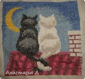 Мачо) фото 2
