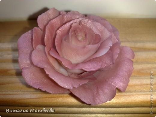 Моя первая роза!!! фото 1