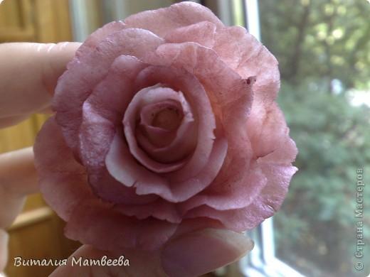 Моя первая роза!!! фото 3