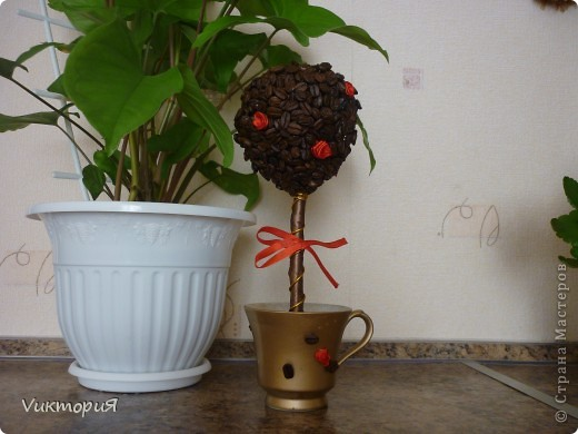 """Поддерживая принцип """"Каждому жителю Страны-по кофейному дереву!"""" вырастила себе деревце!!!"""