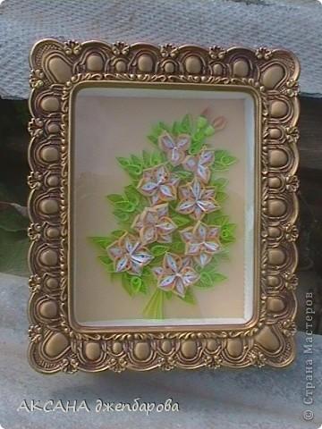 мои первые лилии. фото 3