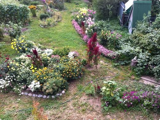 Продолжаю знакомить любителей  садово-огороднического творчества с цветением нового и прекрасного. Решила показать огород-сад с птичьего полета))))) Да , нет, не переживайте, только с высоты второго этажа ( мансарды) дачного домика фото 1