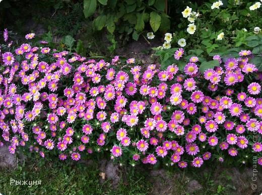 Продолжаю знакомить любителей  садово-огороднического творчества с цветением нового и прекрасного. Решила показать огород-сад с птичьего полета))))) Да , нет, не переживайте, только с высоты второго этажа ( мансарды) дачного домика фото 3