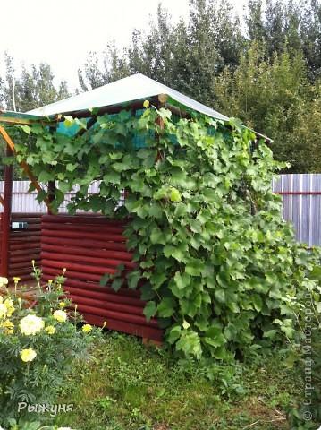 Продолжаю знакомить любителей  садово-огороднического творчества с цветением нового и прекрасного. Решила показать огород-сад с птичьего полета))))) Да , нет, не переживайте, только с высоты второго этажа ( мансарды) дачного домика фото 5
