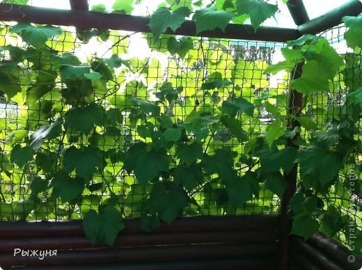 Продолжаю знакомить любителей  садово-огороднического творчества с цветением нового и прекрасного. Решила показать огород-сад с птичьего полета))))) Да , нет, не переживайте, только с высоты второго этажа ( мансарды) дачного домика фото 6