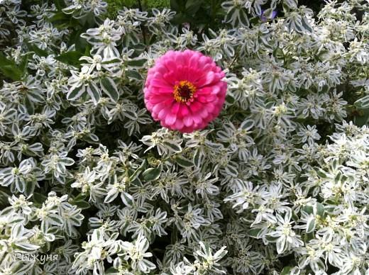 Продолжаю знакомить любителей  садово-огороднического творчества с цветением нового и прекрасного. Решила показать огород-сад с птичьего полета))))) Да , нет, не переживайте, только с высоты второго этажа ( мансарды) дачного домика фото 4