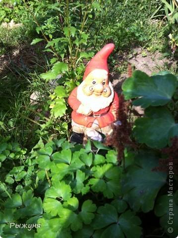 Продолжаю знакомить любителей  садово-огороднического творчества с цветением нового и прекрасного. Решила показать огород-сад с птичьего полета))))) Да , нет, не переживайте, только с высоты второго этажа ( мансарды) дачного домика фото 9