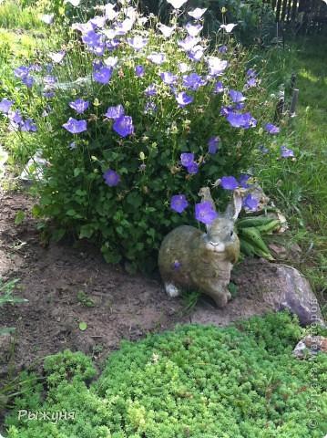 Продолжаю знакомить любителей  садово-огороднического творчества с цветением нового и прекрасного. Решила показать огород-сад с птичьего полета))))) Да , нет, не переживайте, только с высоты второго этажа ( мансарды) дачного домика фото 10