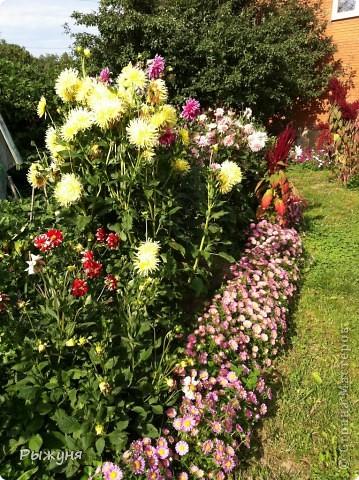 Продолжаю знакомить любителей  садово-огороднического творчества с цветением нового и прекрасного. Решила показать огород-сад с птичьего полета))))) Да , нет, не переживайте, только с высоты второго этажа ( мансарды) дачного домика фото 2