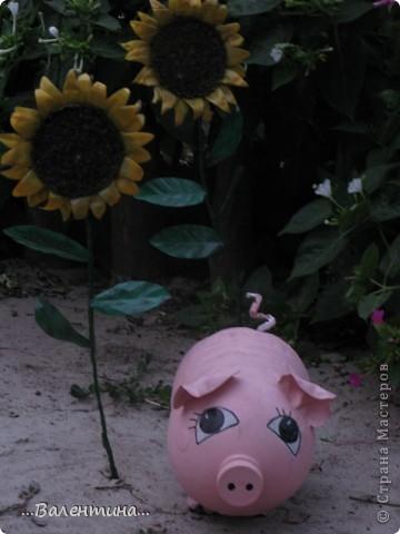 """Лето в наших краях очень жаркое.По официальным сводкам температура """"за бортом"""" больше 40 держится уже второй месяц.А если на солнце? Можете представить себе как высыхает все в огороде, розы теряют свой цвет, не успев распустится, помидоры, огурцы уже почти высохли, картошку выкопали.Даже трава потеряла сочные оттенки зеленого цвета, желтеет... А красоты все равно хочется.Вот и приходится украшать двор. Как у меня это получилось судить Вам. ----------------------------------------------- Озорные поросята так и норовят залезть в грядки. Подсолнушки        http://stranamasterov.ru/node/211482         повернули свои головки за солнцем. фото 3"""