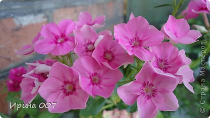 Наконец - то фото своих цветочков выкладываю. Приятного просмотра! фото 3