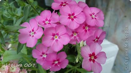 Наконец - то фото своих цветочков выкладываю. Приятного просмотра! фото 4