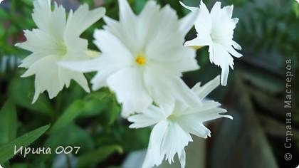 Наконец - то фото своих цветочков выкладываю. Приятного просмотра! фото 8