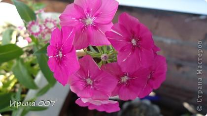 Наконец - то фото своих цветочков выкладываю. Приятного просмотра! фото 10