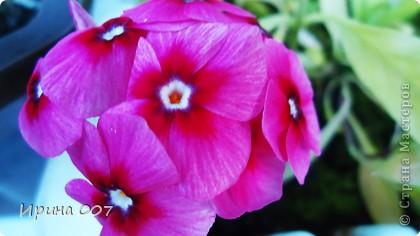 Наконец - то фото своих цветочков выкладываю. Приятного просмотра! фото 20