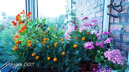 Наконец - то фото своих цветочков выкладываю. Приятного просмотра! фото 31