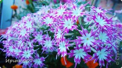 Наконец - то фото своих цветочков выкладываю. Приятного просмотра! фото 1