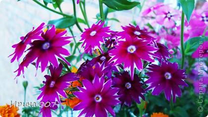 Наконец - то фото своих цветочков выкладываю. Приятного просмотра! фото 24