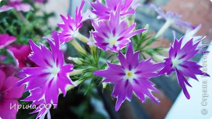 Наконец - то фото своих цветочков выкладываю. Приятного просмотра! фото 26