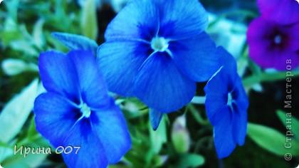 Наконец - то фото своих цветочков выкладываю. Приятного просмотра! фото 28