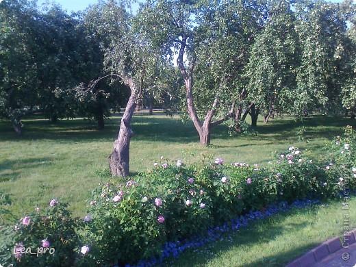 Небольшая прогулка. Парк Коломенское Москва фото 23