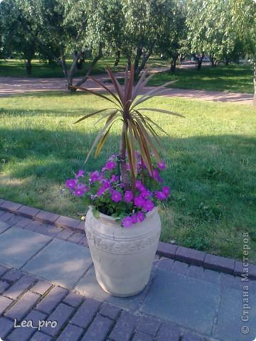 Небольшая прогулка. Парк Коломенское Москва фото 25
