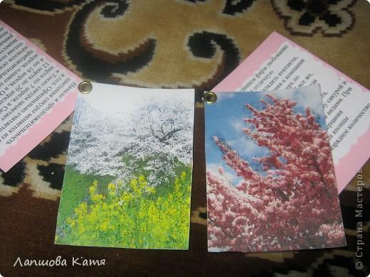 Я сделала АТСки с интересными сведениями  о сакуре(Японской вишне). Здесь 1-2.№2 занят.  фото 4