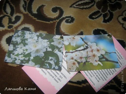Я сделала АТСки с интересными сведениями  о сакуре(Японской вишне). Здесь 1-2.№2 занят.  фото 6