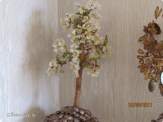 Яблонька фото 5