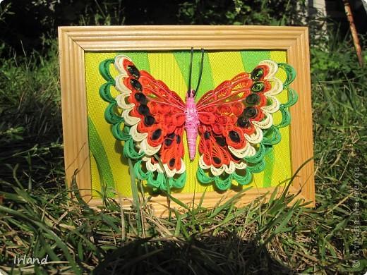 Специально для хомячка =)))   Что-то мне кроме бабочек в голову не лезет пока.  Фон сделан из материала напоминающий сетку =) название не помню простите =) фото 1